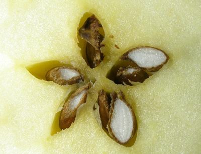 pomme et l'étoile